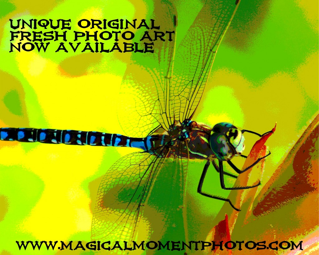 Dragonflies on your Wall