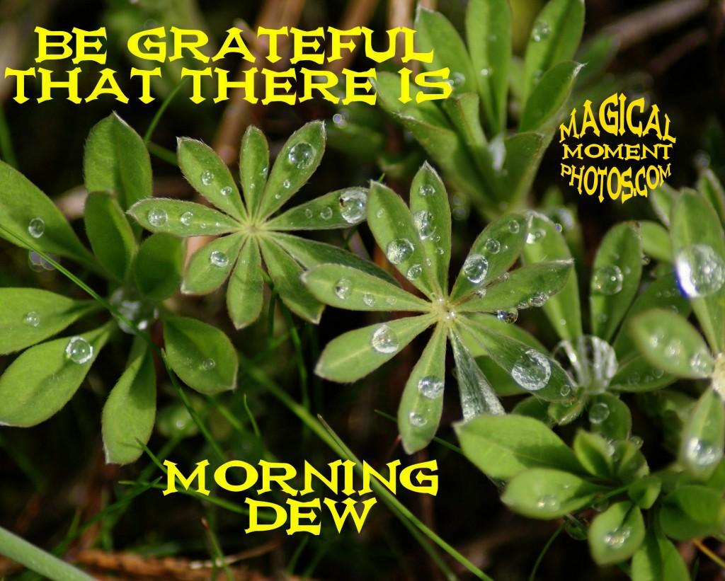 GRATEFUL FOR MORNING DEW IN SPOKANE