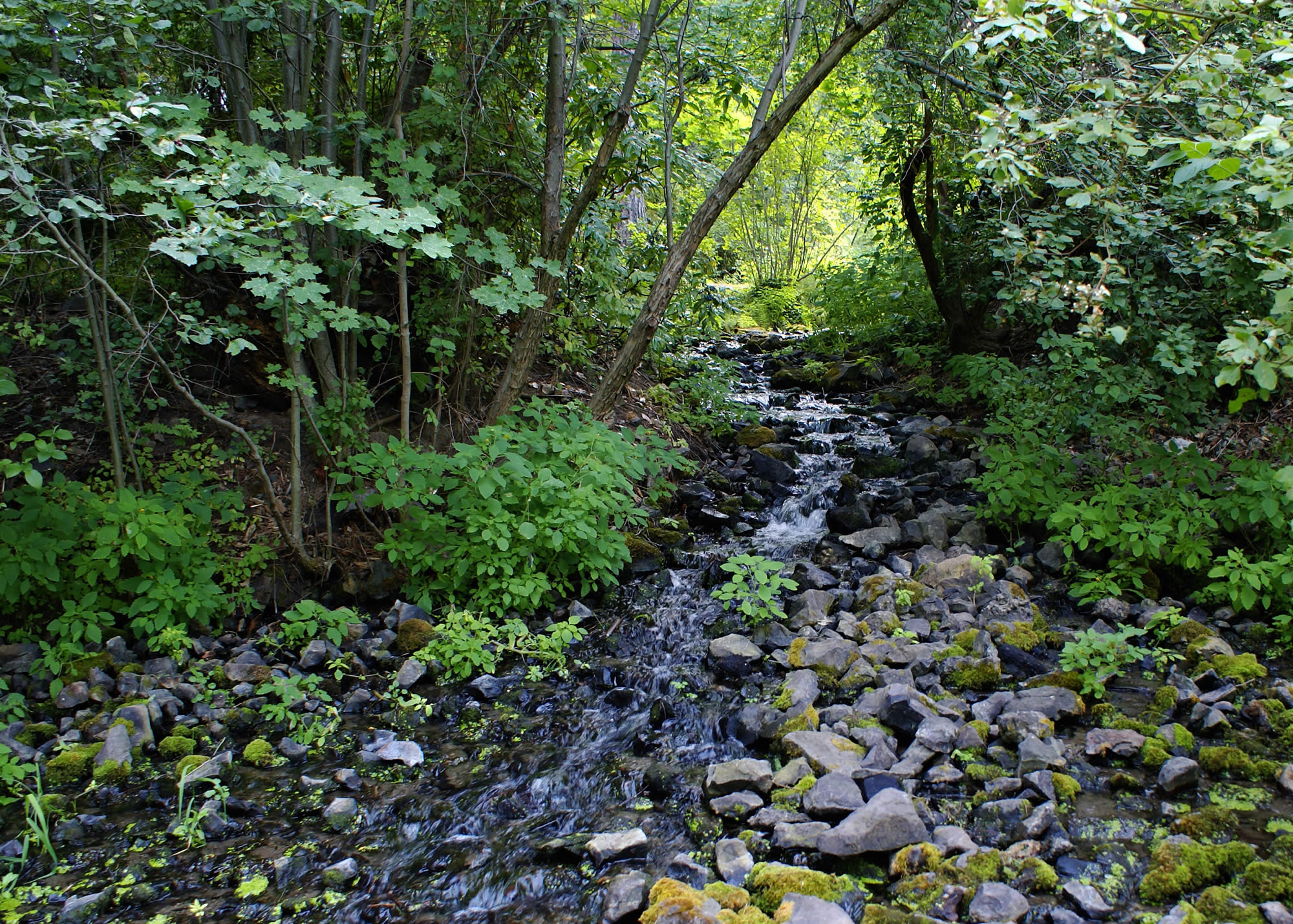 Peaceful Flowing Creek